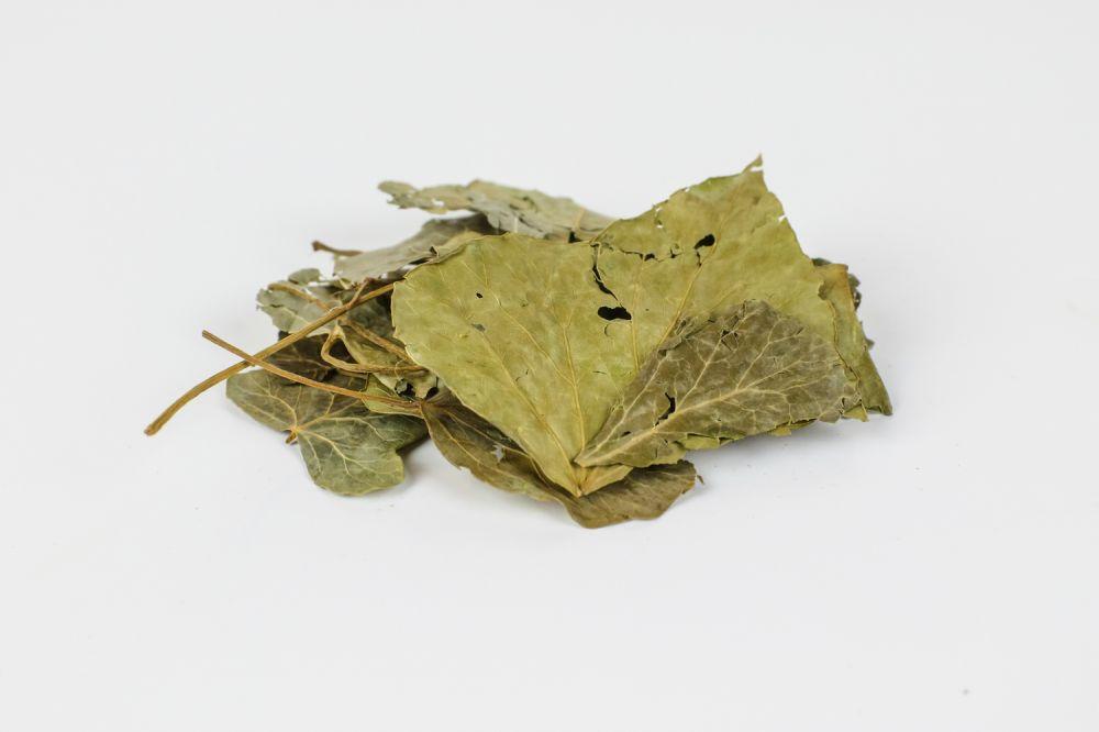 Κισσός φύλλα