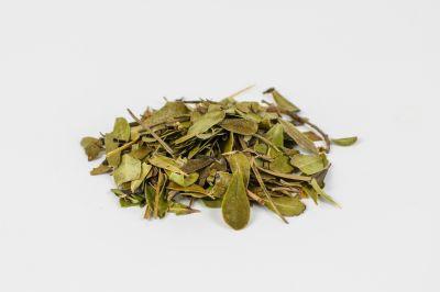 Αρκτοστάφυλλο φύλλα