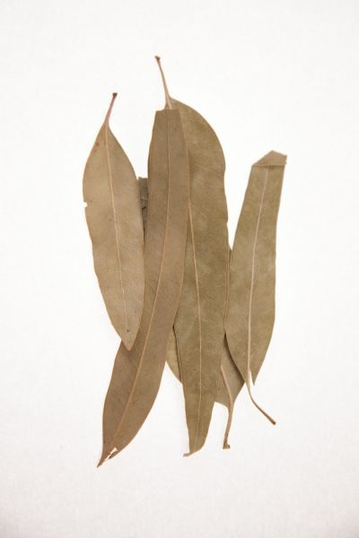 Ευκάλυπτος φύλλα ολόκληρα